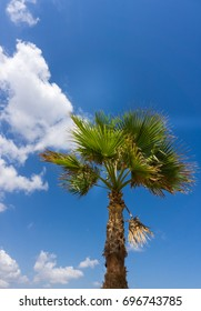 View on a Big Palm in front of a blue Sky and white Clouds