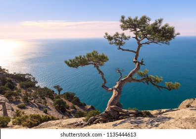 View on the Black Sea from the top of the mountain at sunrise. The pine tree on the rock is illuminated by the sun's rays. New world (Novy Svet). Crimea. Black Sea. Eastern Europe