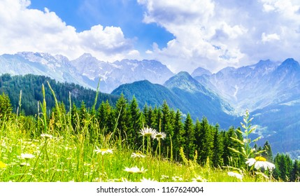 View on blooming meadow and mountains of the slovenian Alps