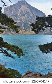 View on blue sea, ocean blue sea water and rock, mountain, rock with forest trough branch of pine, spruce, fir tree, Crimea