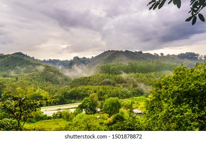 View on coffee plantation next to Salento, Colombia