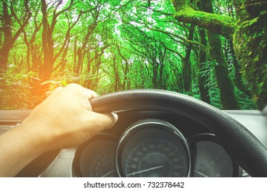 View on the dashboard of the truck driving.The driver is holding the steering wheel. Green forest is in front of the car.
