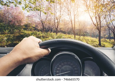 View on the dashboard of the truck driving.The driver is holding the steering wheel. Seen Pink Wild Himalayan Cherry blooming blossom in PhuLomLo Loei Province , Thailand.