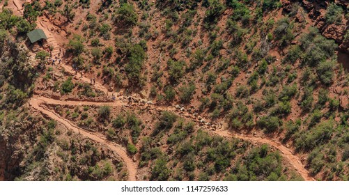 View on descending mules with supplies on the red colored Bright Angel Trail in the Grand Canyon.