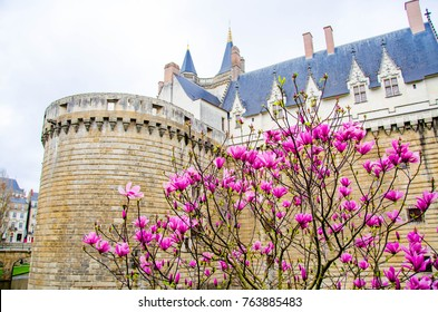 View on the external walls of Breton Castle in Nantes with flowers foreground.