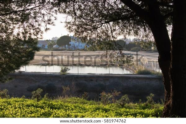 view on fbeautiful ishing farm in park rio formosa, algarve, spain
