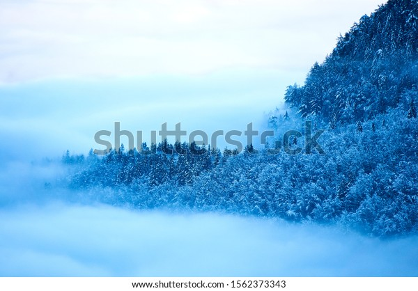view-on-foggy-mysterious-forest-600w-156