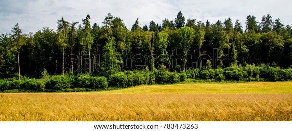 View on Forest border