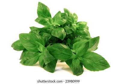 View on a fresh basil bouquet over white background.