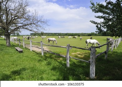 View on the herd of horses on pasture