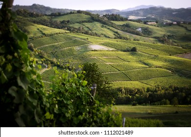 a view on italian hills with typical wineyards of rural countryside.