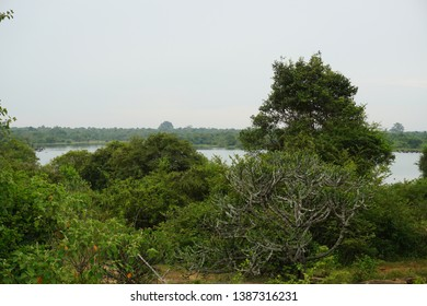 View on lake in Udawalawa nation park with gnu or wildebeest