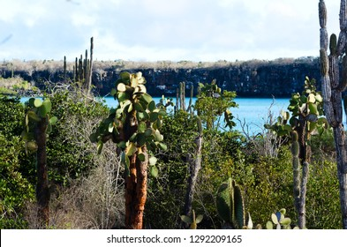 A view on the landscape with cacti in the Galapagos islands