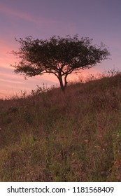 View on lonely tree at sunset