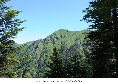 View on a lush mountain top from the forest on the GR10 trail in the Pyrenees, France