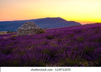 View on the Mont Ventoux, from the village Ferrassieres. Provence, France. Lavender field and dry stone hut (borie) in the middle of the field. Sunset.