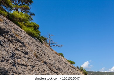 View on mountain slope with few south pines and one dried tree lit with sunlight under clean blue sky in Crimea