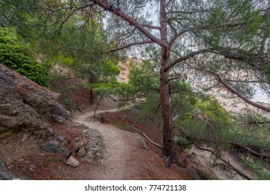 View on mountain stony path running through tree and bush thicket on slope above sea on sunset in Crimea