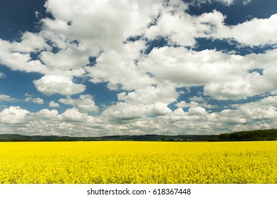View on oil seed rape with blue sky and white clouds