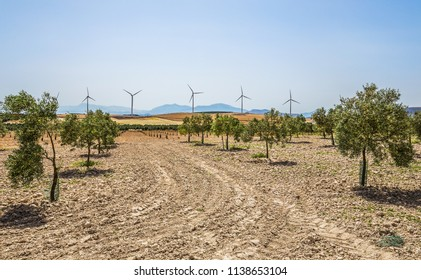 View on olive groves and wind generator in Andalusia, Spain