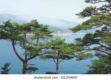 View on a sea through pine branches on the rock. View from above.