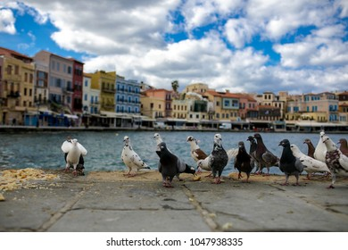View on sea-front with pigeons. Chania. Crete. Greece