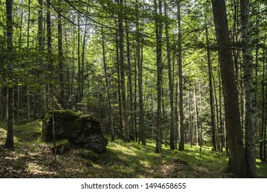 View on a shady Dolomiti forest, Italy