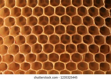 View on shape cell an honeycomb. A bee patch made by bees from wax. It is used for storing honey, perga and for breeding larvae.