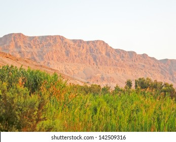 View on sunny mountain ridge along Dead Sea shore at dawn with cane growth before. Judean desert, Metzoke Dragot, Israel.