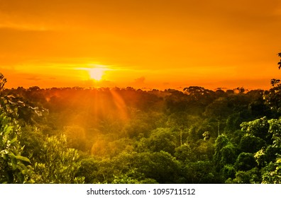 View on sunset over the trees of the rain forest in Brazil