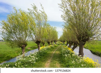 View on a typical Dutch landscape in spring in the beautiful green heart of the Netherlands. The path is part of the Pelgrimspad, an old traditional pilgrimage trail through the Netherlands.