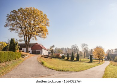 View on very old protected maple tree in autumn colors, old farm and gardens on countryside near South Bohemia in the Czech Republic. Viewed from road.