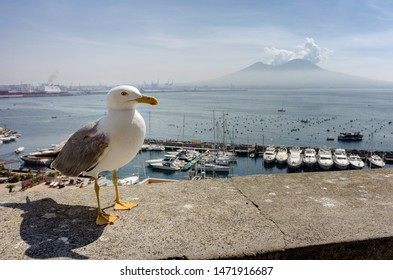View on the Vesuvio volcano from Naples harbour with the seagull