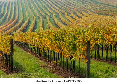 View on the vineyards of Perchtoldsdorf and Vienna Wood in Autumn