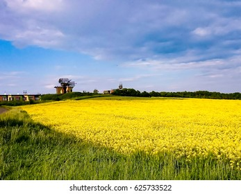 view on the yellow field