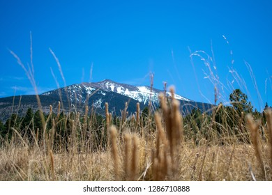 View of one of the mountains in Flagstaff Arizona. Looking through the tall grass.