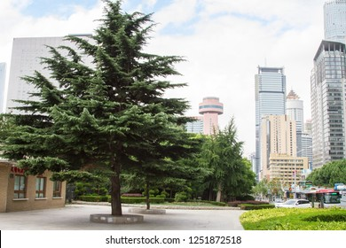 view of one of the streets of the Chinese city of Dalian. coniferous tree on the background of modern buildings. Travel in China. Dalian, China - august 12, 2018