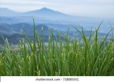 Jawa barat images stock photos vectors shutterstock view of onions grass with mountain background in west java thecheapjerseys Image collections