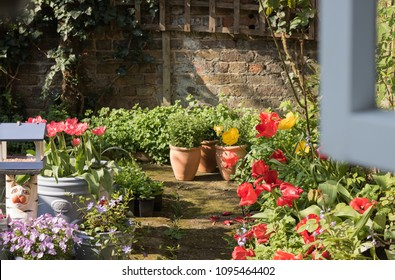 It's a view from an open window to a colorful sunny garden with a lot of flowers & plants from garden center. Wooden window frame is blurred. Good morning card. English garden lifestyle.