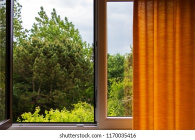 View out of a Window with curtain