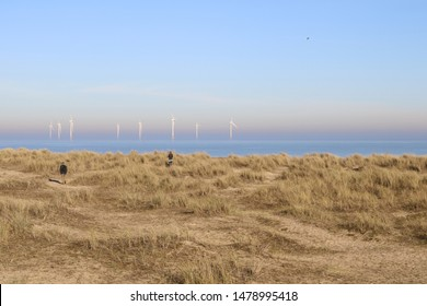 view over the beach and dunes at Great Yarmouth, Norfolk, England with offshore wind farm in the distance