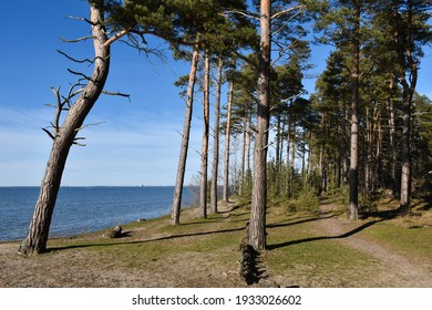 View over blue water from a seaside forest by Sandbergen on the island of Oland in Sweden