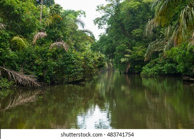 View over the canals and jungle of Tortuguero during a canal boat trip to spot wildlife, Costa Rica.