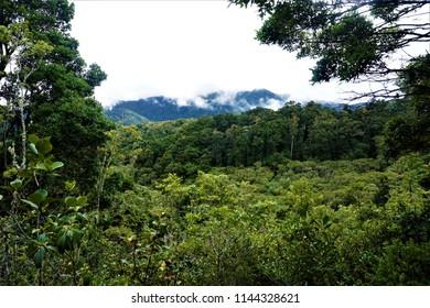 View over the cloud forest in San Gerardo de Dota