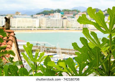 View over Concha bay in San Sebastian, Spain with figue leaves on the foreground.
