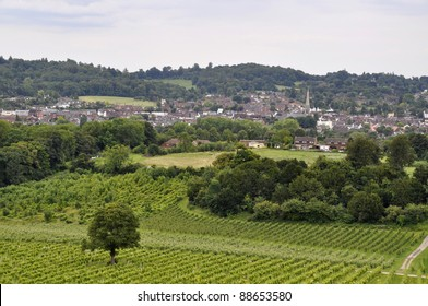 View over Dorking with vineyard in foreground, Surrey, England
