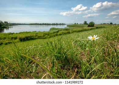 View over dutch nature reserve with delta landscape. Fresh green grassy Dutch dyke with a view over the water and blooming wild flowers