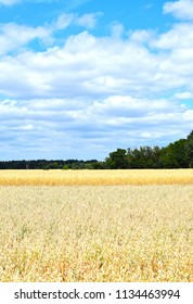 View over golden grain fields to a forest edge under a blue sky with white clouds