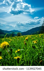 a View over a grassland with flowers