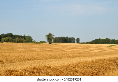 view over harvested field to trees in background in summer landscape in swabian alb in germany